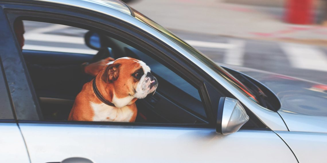 A third of UK drivers risking fines by failing to restrain pet passengers